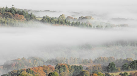 Blanket of mist over Abbeyford Woods