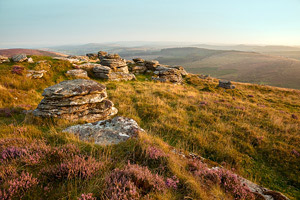 Beautiful pink heather on Birch Tor, Dartmoor