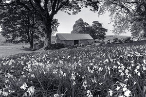 Black and White image of Emsworthy Barn surrounded by bluebells