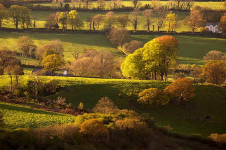 Golden light shining on trees and fields, Brentor, Devon