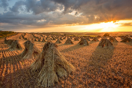 Sun setting behind rows of stooks bathing them in golden light